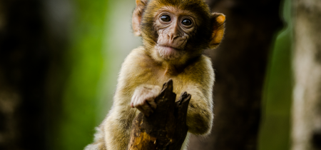Monkey Forest Admission 2020