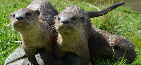 Otter Experience - Book Now!