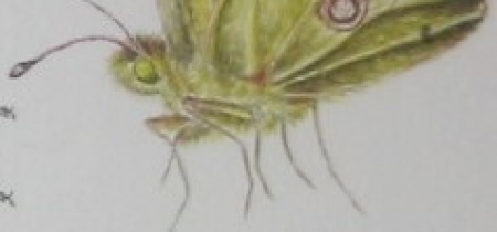 Part two of an Artistic and Scientific Appreciation of Metamorphosis – the Beautiful and Mysterious Lifecycle of Butterflies and