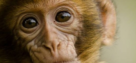 Monkey Forest Admission