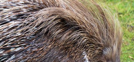 Book Now! Porcupine Experience @ Sandwich Wildlife Park
