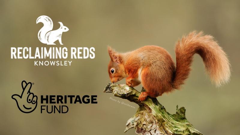 Red Squirrel Awareness Week Talk