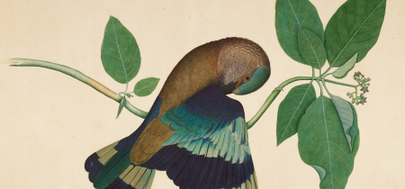 EXHIBITION - Forgotten Masters: Indian Painting for the East India Company