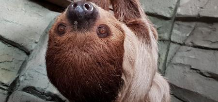 Book Now! Sloth Experience @ Sandwich Wildlife Park