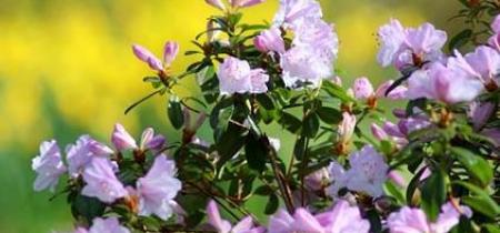 Arley Hall & Gardens - Spring Plant Fair