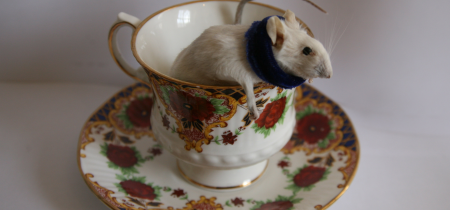 Taxidermy: 'Mouse in a Teacup'
