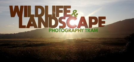 Wildlife & Landscape Photography Tram