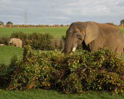 Double Elephant Experience Gift Voucher