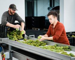 Vineyard/Winery Tour & Wine Tasting Voucher