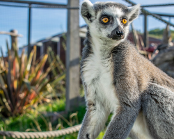 Primate and Meerkat Experience Gift Voucher