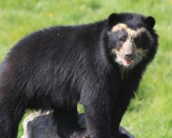 Gift Bear Encounter