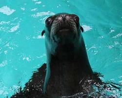 Mini Sea Lion Experience Image