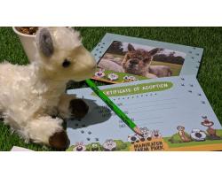 Adopt the Alpacas
