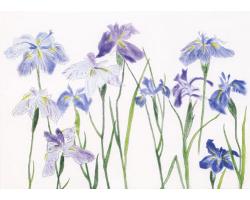Irises greetings card