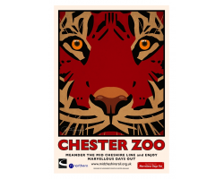 A3 Tiger Chester Zoo Poster
