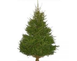 Christmas Tree 6-7ft