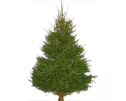Christmas Tree 6-7ft