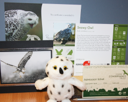 Adopt Sweeney Todd the Snowy Owl