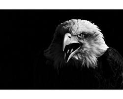 The Hawk Conservancy 2018 Calendar