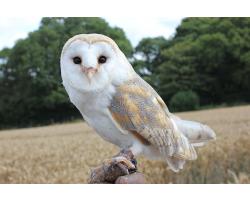 Gift Bird or Prey Encounter