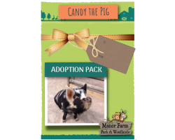 Candy the Pig Adoption