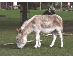 Adopt our Pair of Donkeys for 1 year