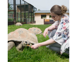 Gift Giant Tortoise Encounter