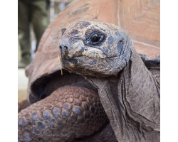 Giant Tortoise Adoption