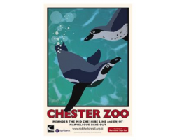 A3 Chester Zoo Penguin Poster